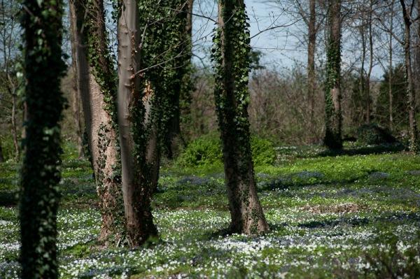 Blumen, Farben und ein Wäldchen lassen das Schloß Loersfeld märchenhaft und einladend wirken.