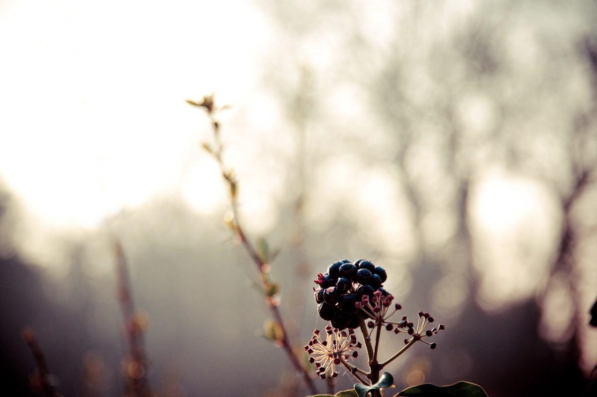 Natur pur in typischen Frühlingsfarben