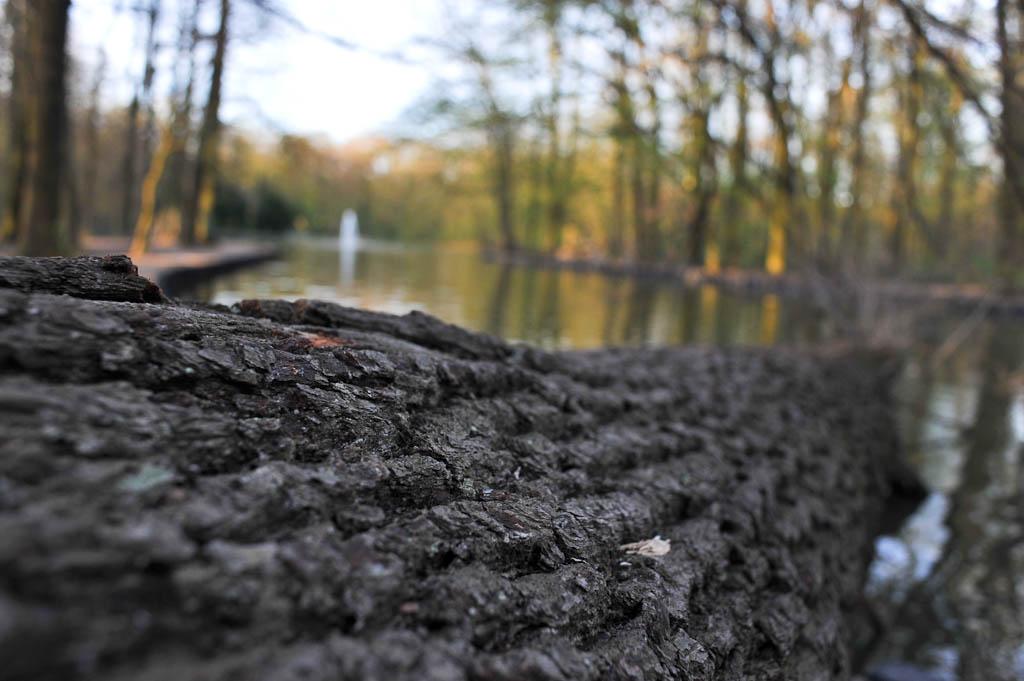 umgefallener Baum am Wildpark im Stadtwald