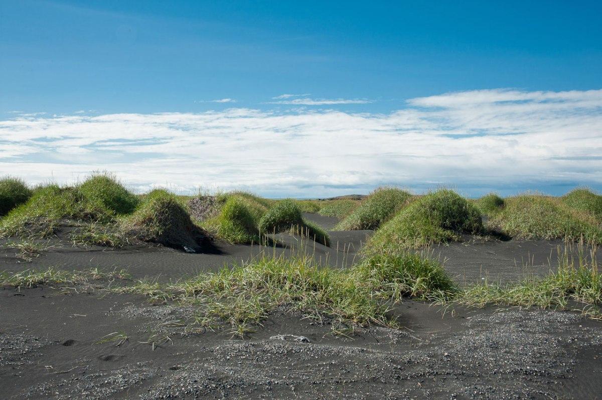 Interessante Vegetation auf Island
