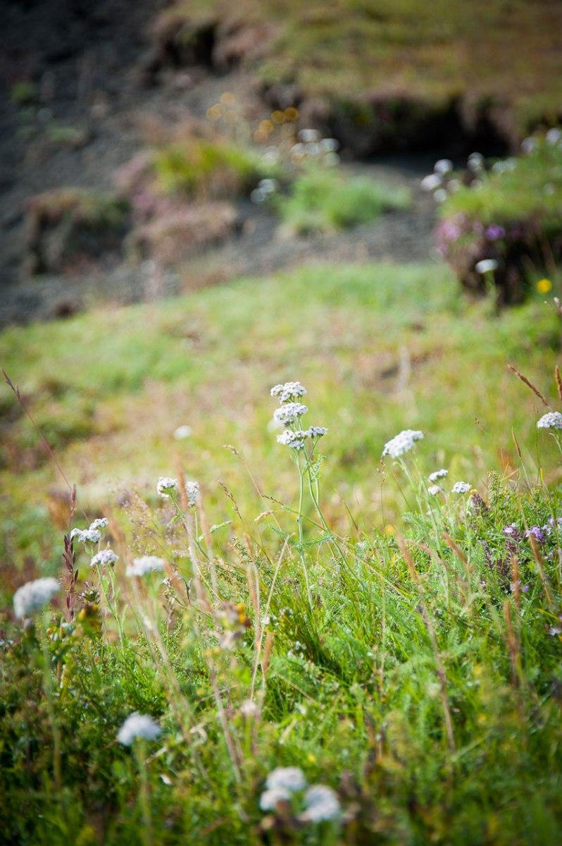 Wiese mit einheimischen Pflanzen