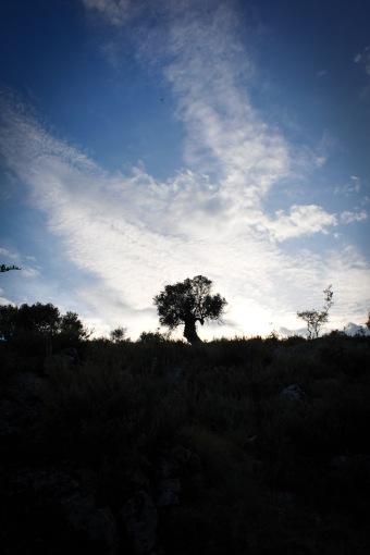 ein einsamer Baum im Niemansland