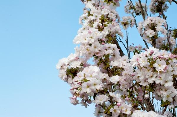 Der Frühlingsanfang ist eine schöne Zeit, vor allem für Fotografen