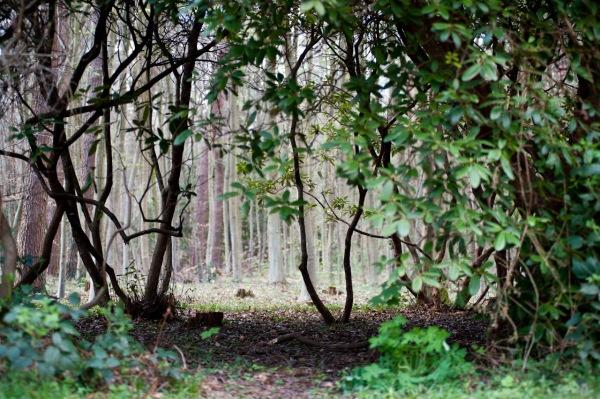 Eine kleine Lichtung im Wald