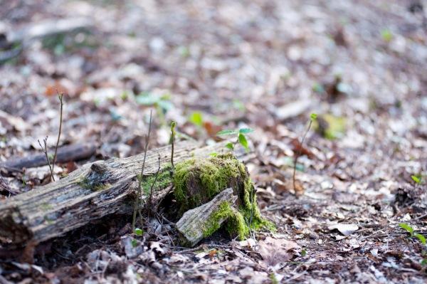 Holzstamm im Wald