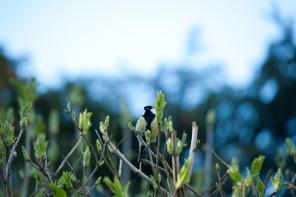 Kleiner Vogel fotografiert zur blauen Stunde in Köln.
