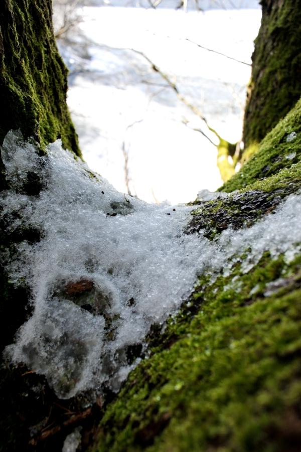 Schneereste auf dem Baum zeigen das der Winter noch präsent ist.
