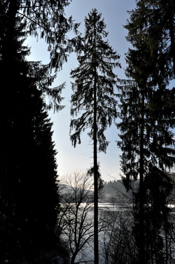 Die Bäume in der Aggertalsperre haben ausreichend Platz zum wachsen.