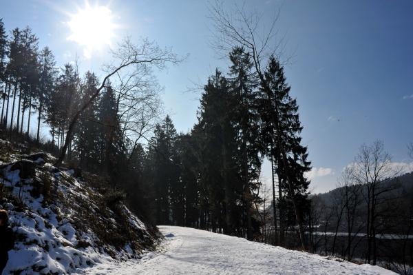 Unfassbar groß sind die Bäume in der Aggertalsperre
