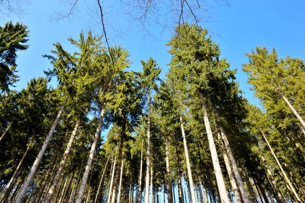 Man ahnt nicht wie hoch diese Bäume sind.