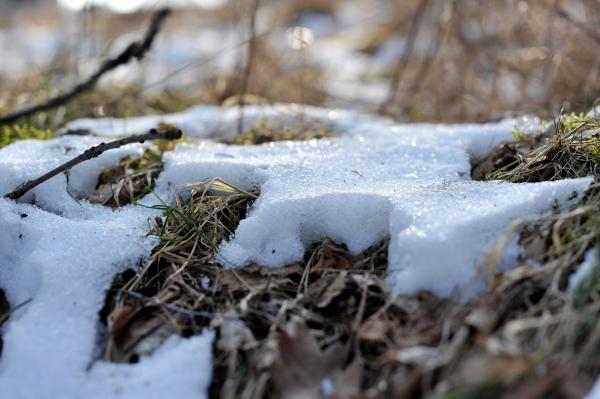 Auch der Winter geht im Nationalpark Eifel dem Ende zu...