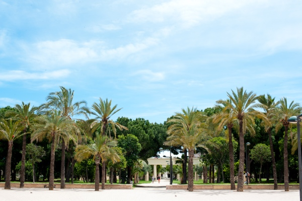 Was wäre das Paradies ohne Palmen