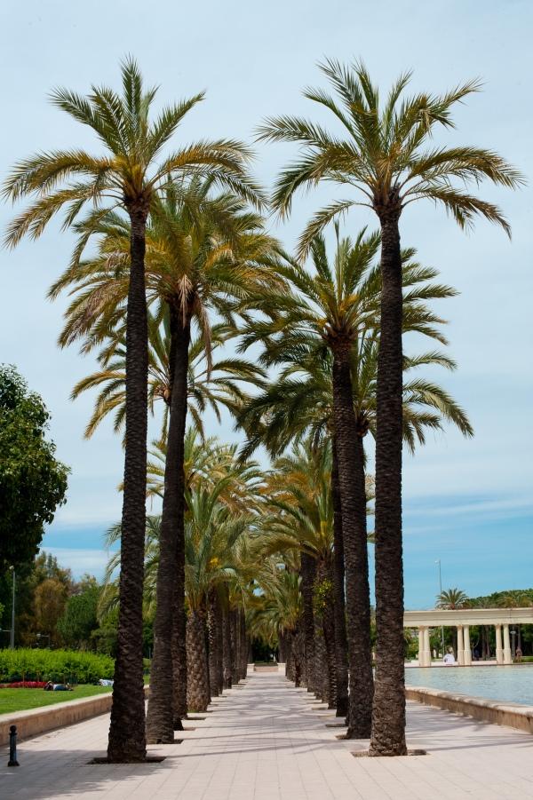 Allee aus Palmen mitten in Valencia